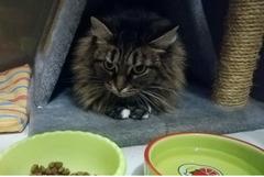 Гостиница-Передержка для кошек и маленьких собак