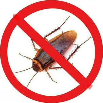 Уничтожение тараканов и клопов в Тюмени